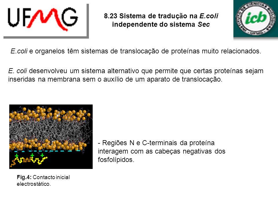 8.23 Sistema de tradução na E.coli independente do sistema Sec