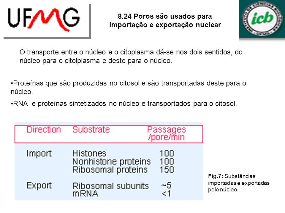 8.24 Poros são usados para importação e exportação nuclear