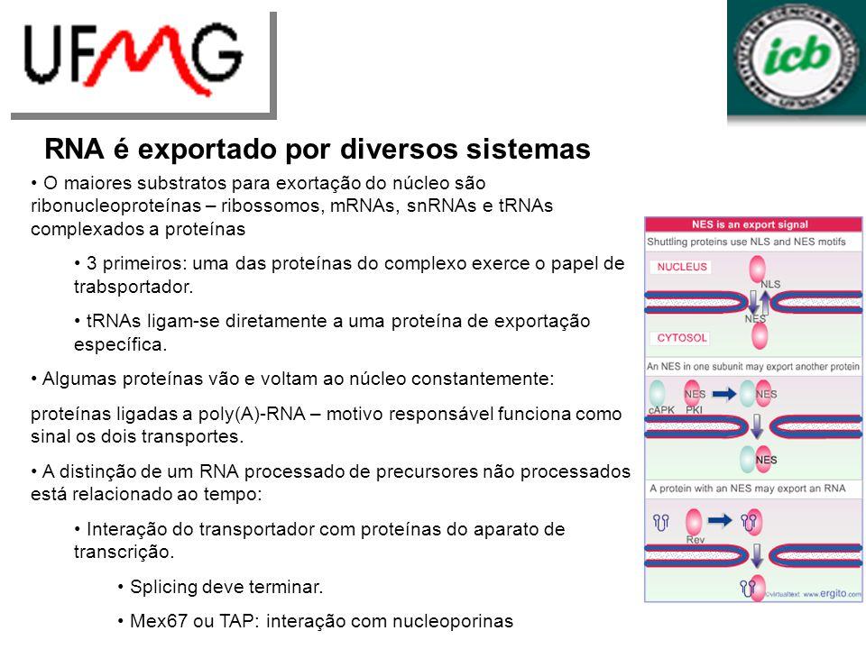 RNA é exportado por diversos sistemas