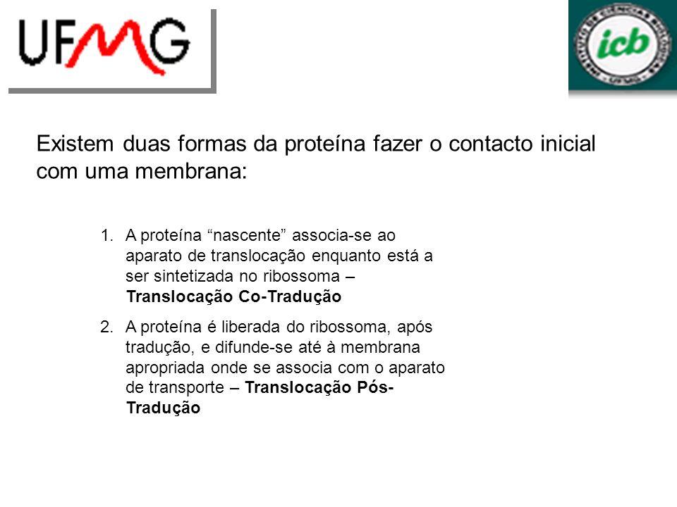 Existem duas formas da proteína fazer o contacto inicial com uma membrana: