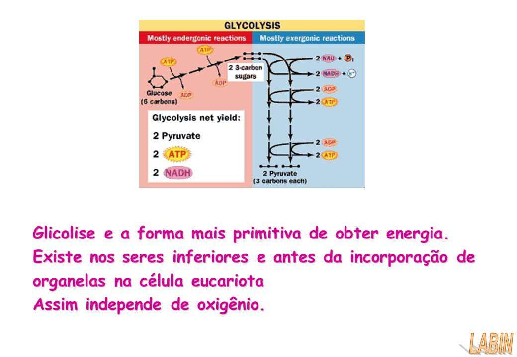 Glicolise e a forma mais primitiva de obter energia.