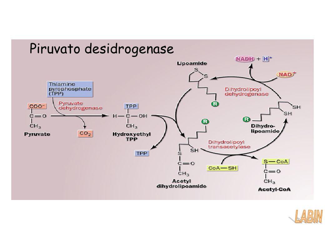 Piruvato desidrogenase