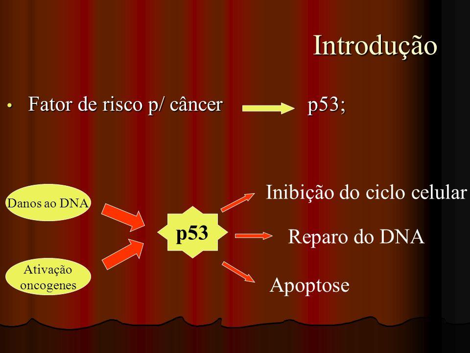 Introdução Fator de risco p/ câncer p53; Inibição do ciclo celular p53