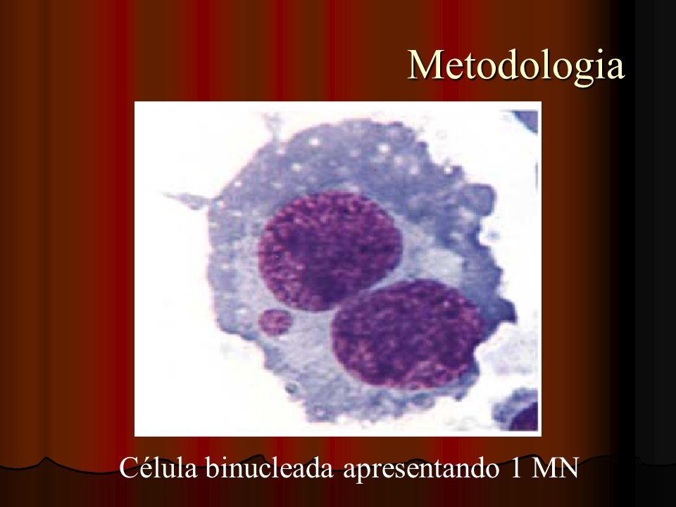 Célula binucleada apresentando 1 MN