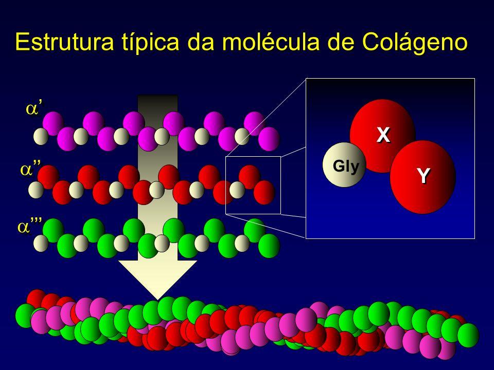 Estrutura típica da molécula de Colágeno