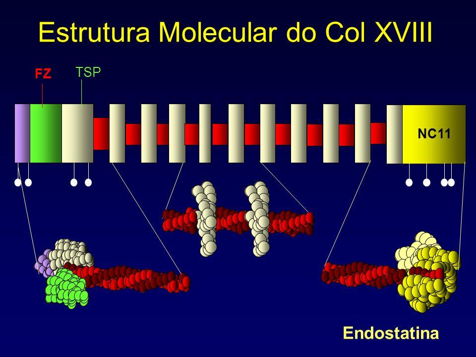 Estrutura Molecular do Col XVIII