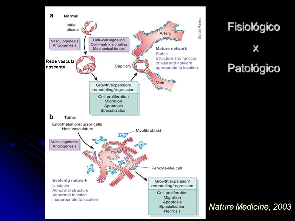 Fisiológico x Patológico Rede vascular nascente Nature Medicine, 2003