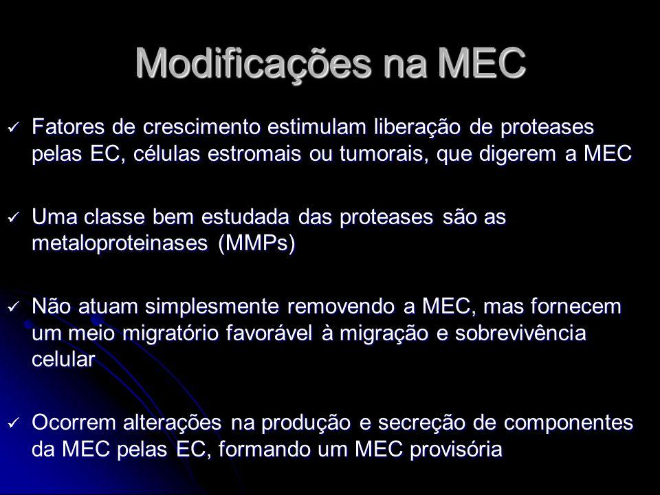 Modificações na MEC Fatores de crescimento estimulam liberação de proteases pelas EC, células estromais ou tumorais, que digerem a MEC.