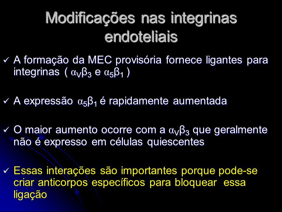 Modificações nas integrinas endoteliais