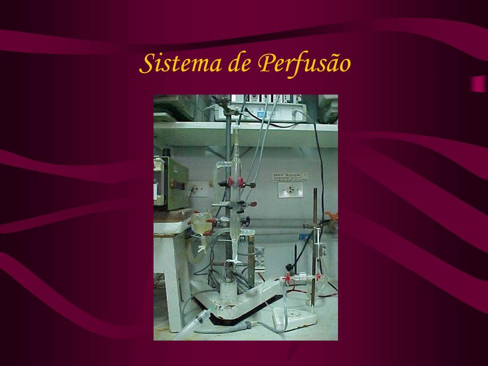 Sistema de Perfusão