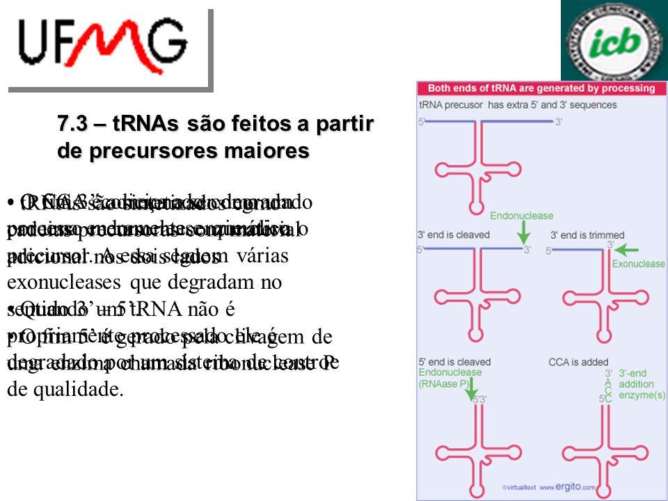 7.3 – tRNAs são feitos a partir de precursores maiores