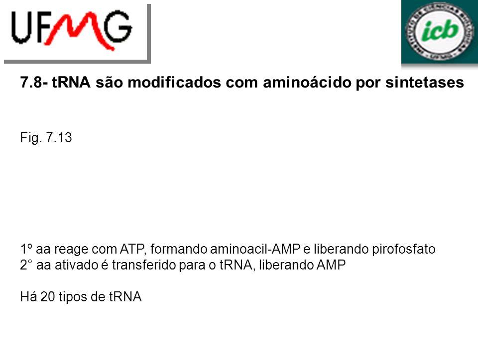 7.8- tRNA são modificados com aminoácido por sintetases