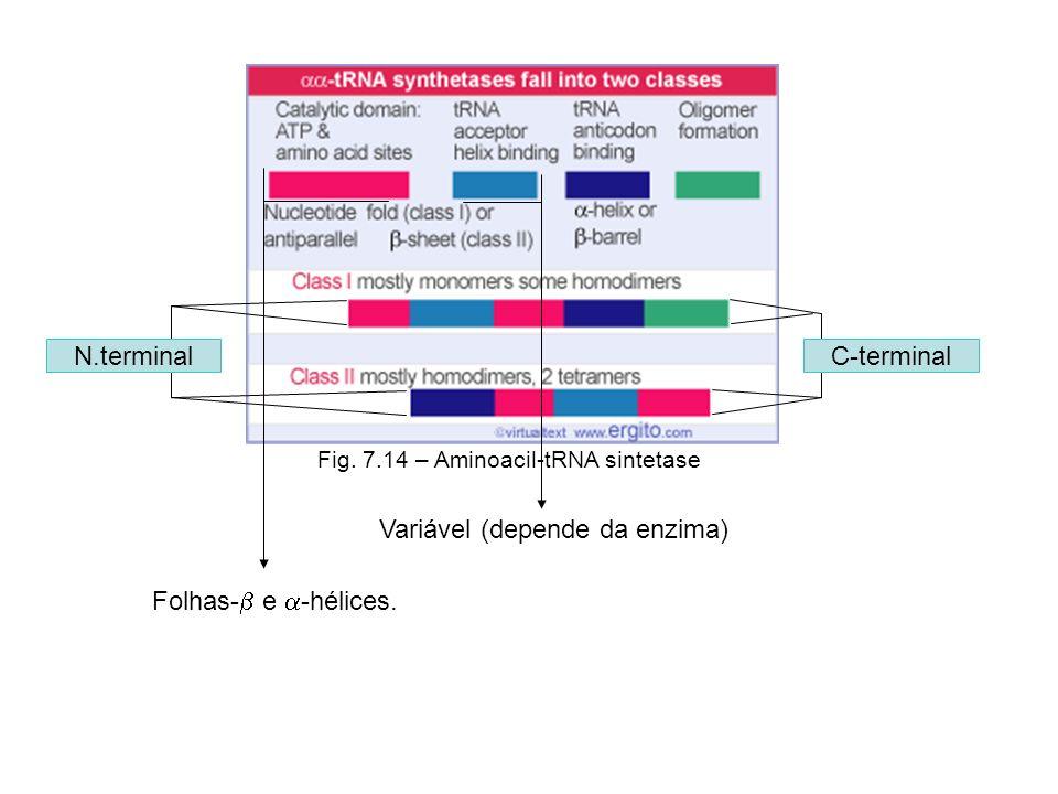 Variável (depende da enzima)