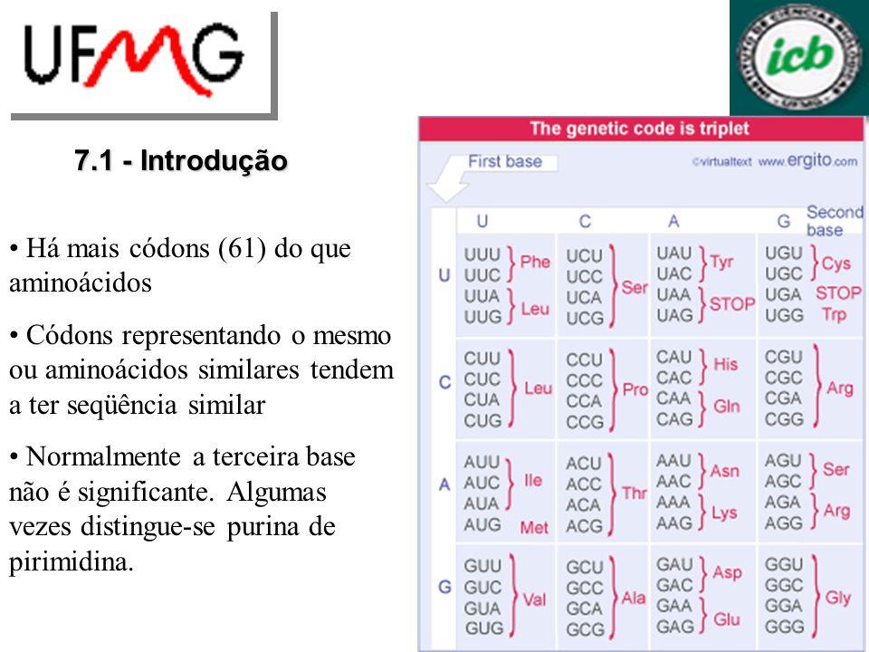 7.1 - Introdução Há mais códons (61) do que aminoácidos. Códons representando o mesmo ou aminoácidos similares tendem a ter seqüência similar.