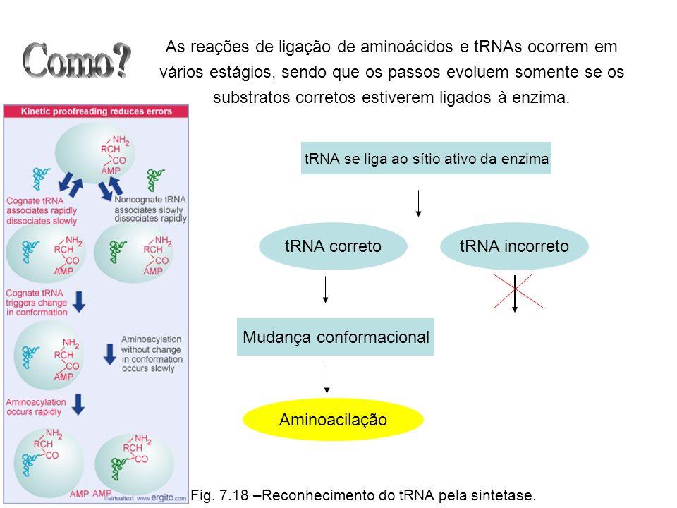 As reações de ligação de aminoácidos e tRNAs ocorrem em vários estágios, sendo que os passos evoluem somente se os substratos corretos estiverem ligados à enzima.