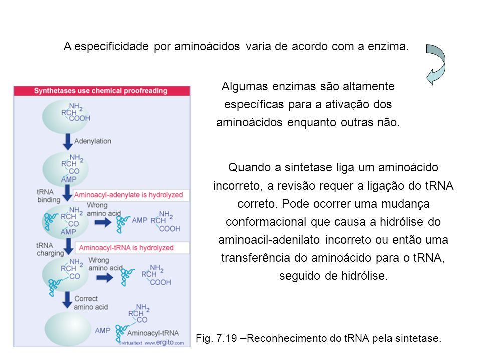 A especificidade por aminoácidos varia de acordo com a enzima.