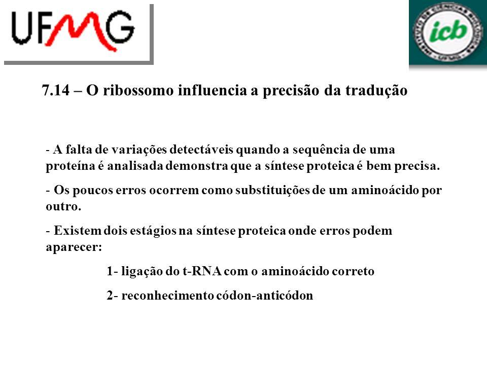 7.14 – O ribossomo influencia a precisão da tradução