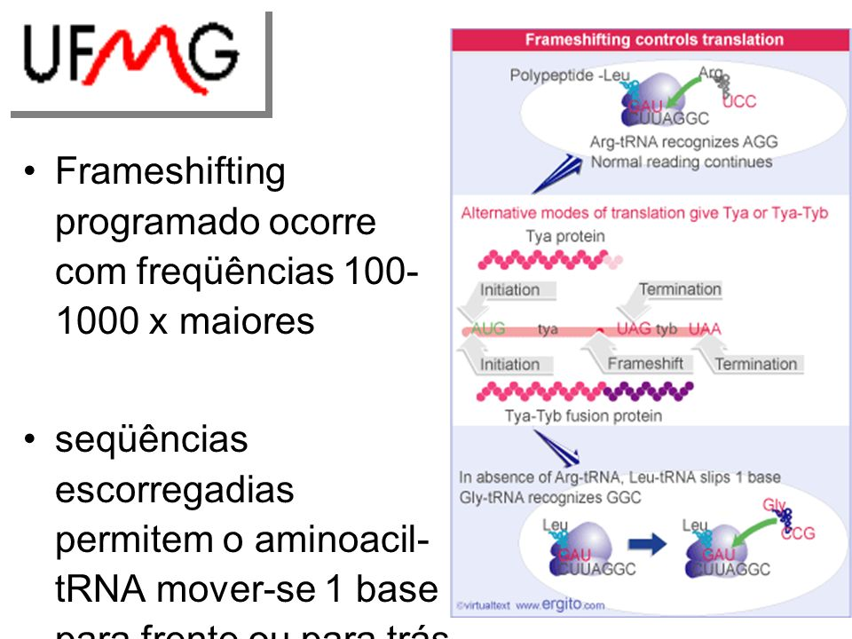 Frameshifting programado ocorre com freqüências 100-1000 x maiores
