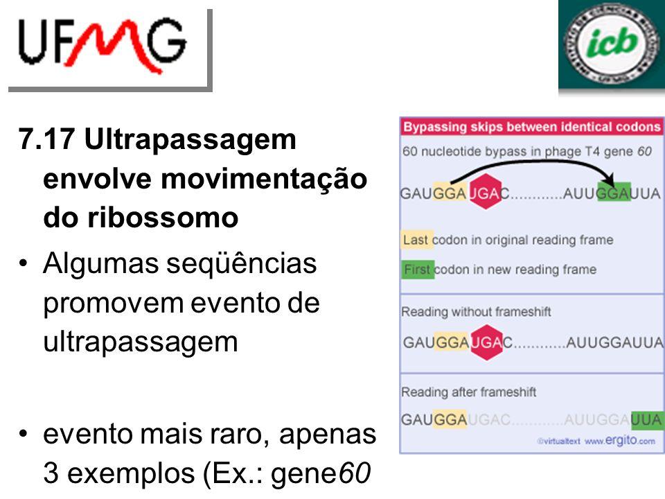 7.17 Ultrapassagem envolve movimentação do ribossomo