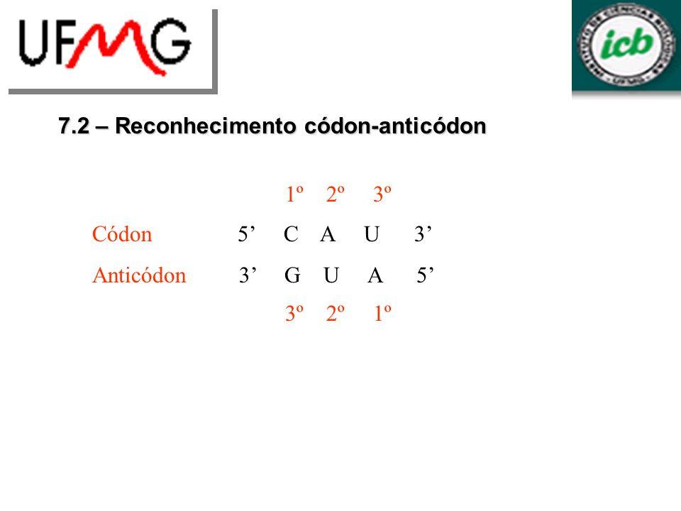 7.2 – Reconhecimento códon-anticódon