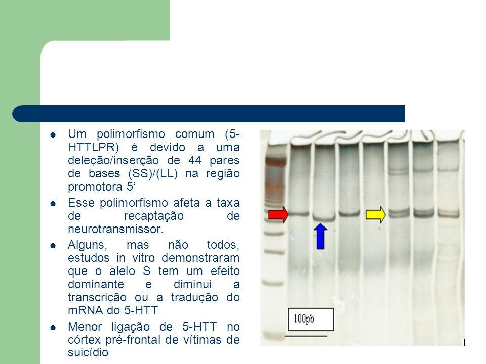 Um polimorfismo comum (5-HTTLPR) é devido a uma deleção/inserção de 44 pares de bases (SS)/(LL) na região promotora 5'