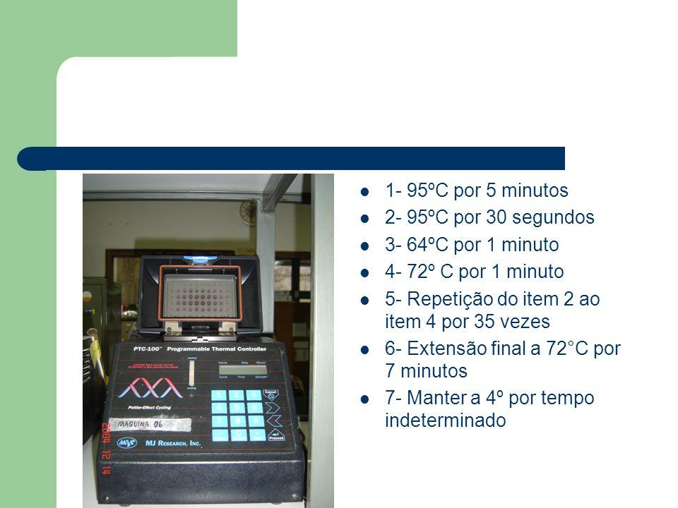 1- 95ºC por 5 minutos 2- 95ºC por 30 segundos. 3- 64ºC por 1 minuto. 4- 72º C por 1 minuto. 5- Repetição do item 2 ao item 4 por 35 vezes.