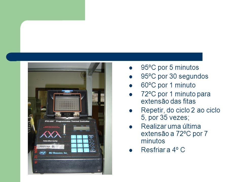 95ºC por 5 minutos 95ºC por 30 segundos. 60ºC por 1 minuto. 72ºC por 1 minuto para extensão das fitas.