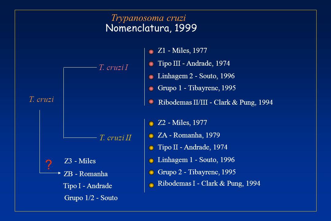 Trypanosoma cruzi Nomenclatura, 1999 T. cruzi I T. cruzi T. cruzi II