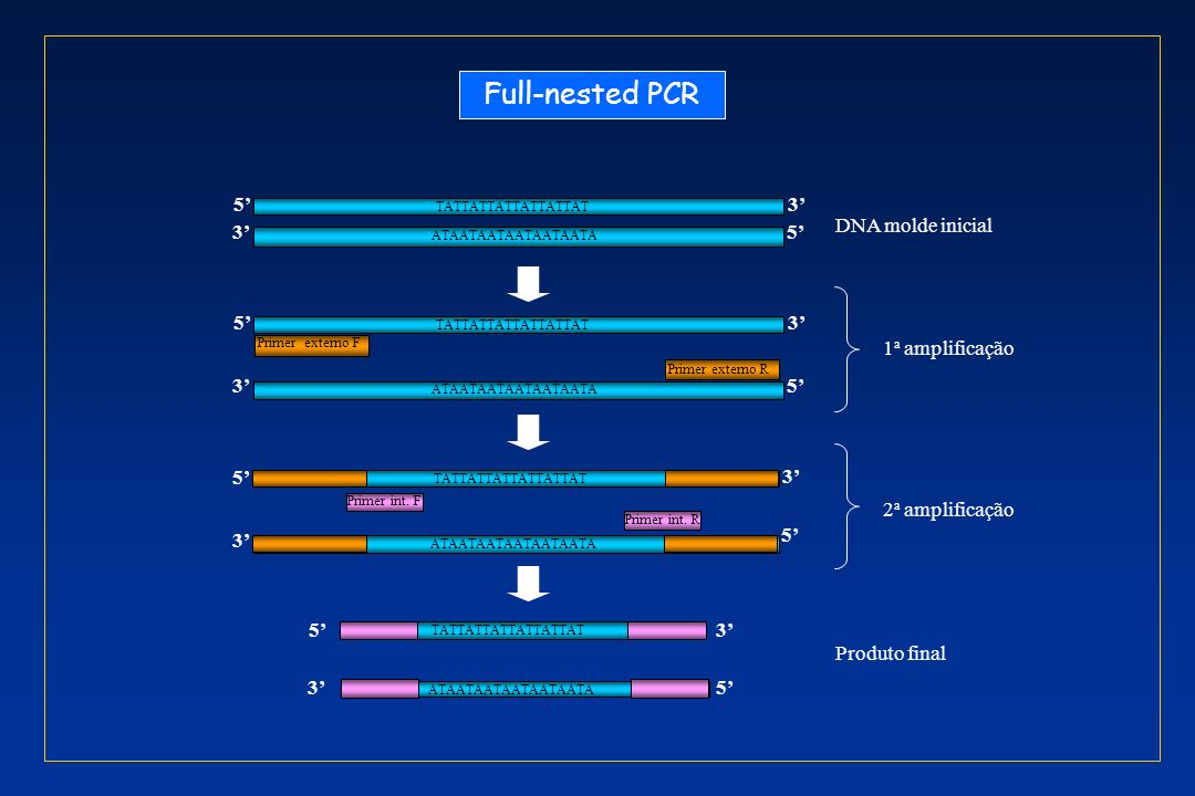 Full-nested PCR 5' 3' DNA molde inicial 5' 3' 1a amplificação 3' 5' 3'