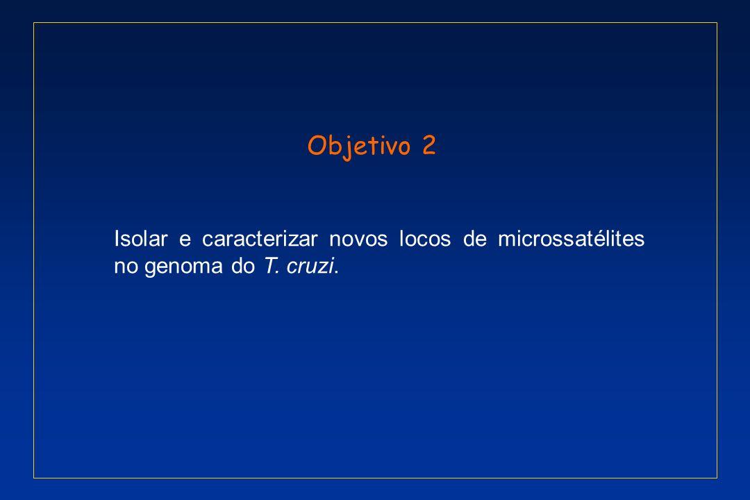 Objetivo 2 Isolar e caracterizar novos locos de microssatélites no genoma do T. cruzi.