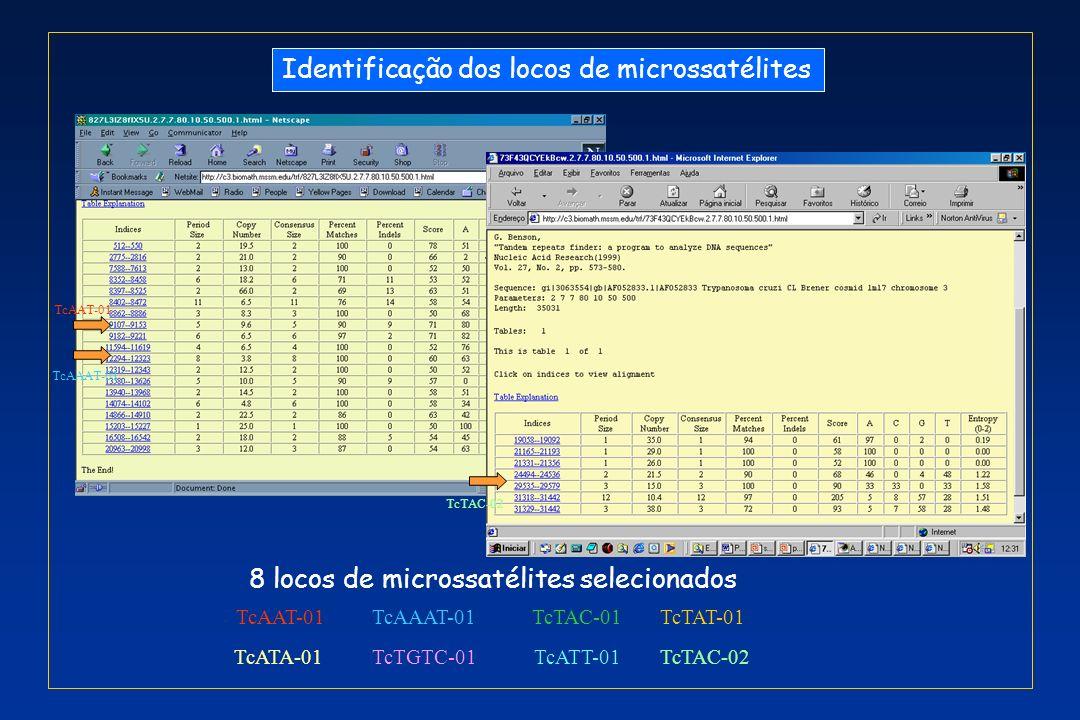 Identificação dos locos de microssatélites