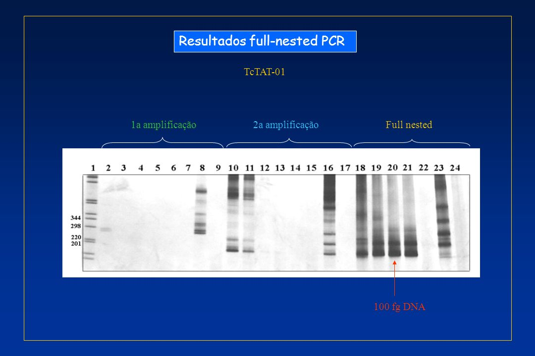 Resultados full-nested PCR