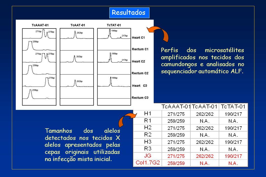 Resultados Perfis dos microsatélites amplificados nos tecidos dos camundongos e analisados no sequenciador automático ALF.