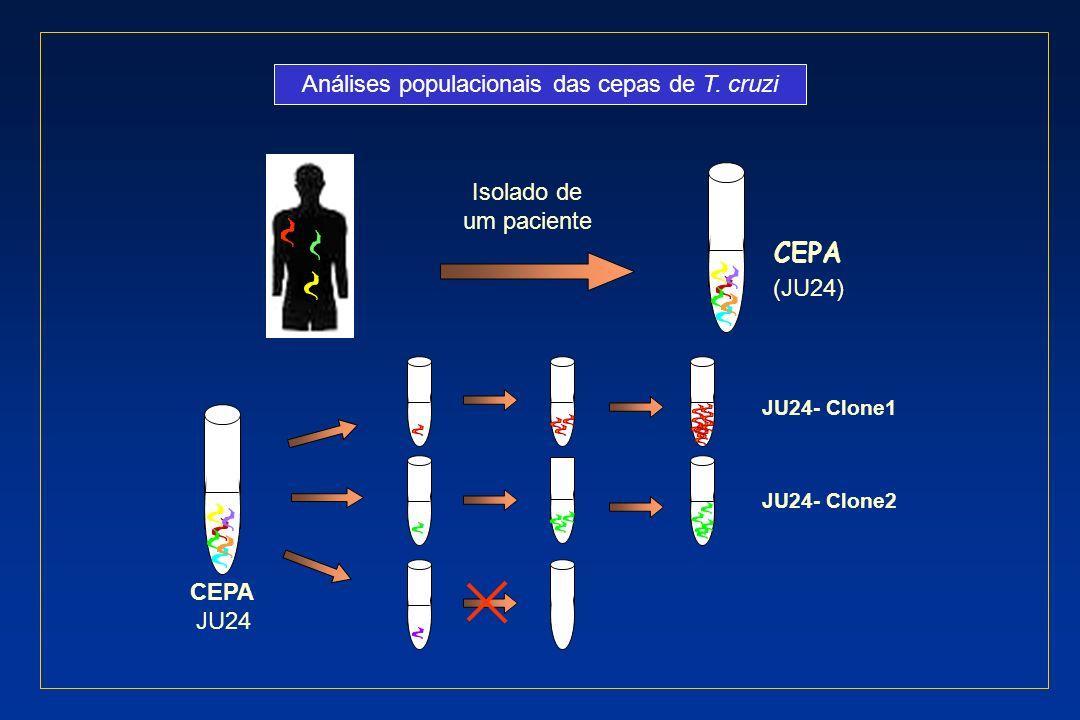 Análises populacionais das cepas de T. cruzi