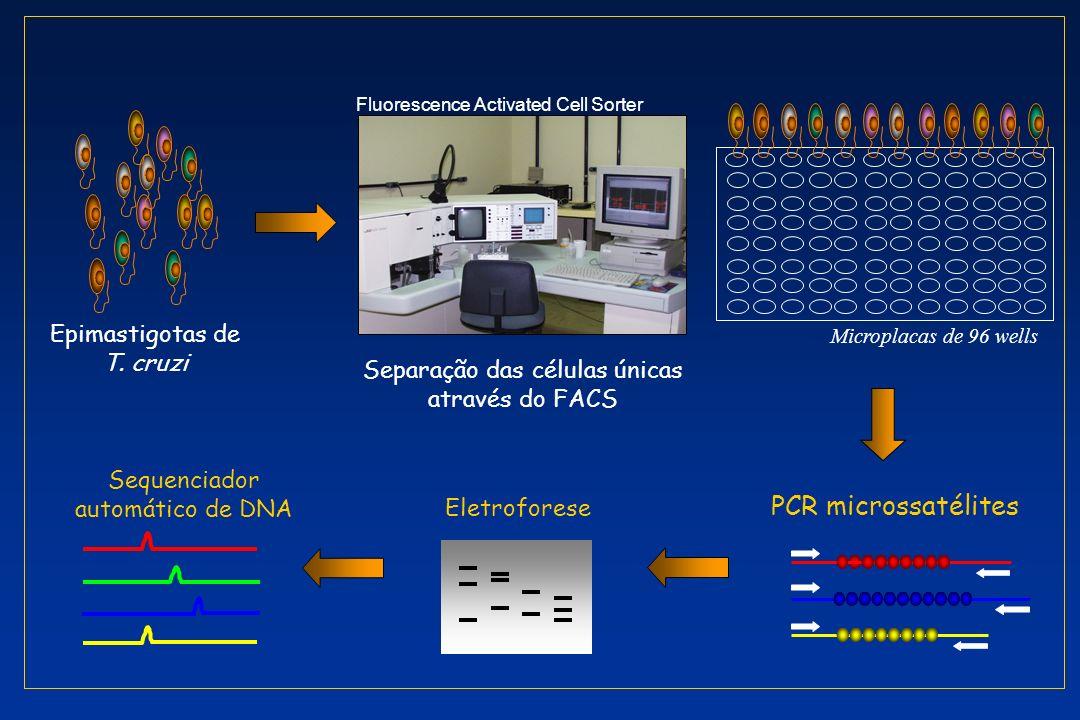 PCR microssatélites Epimastigotas de T. cruzi