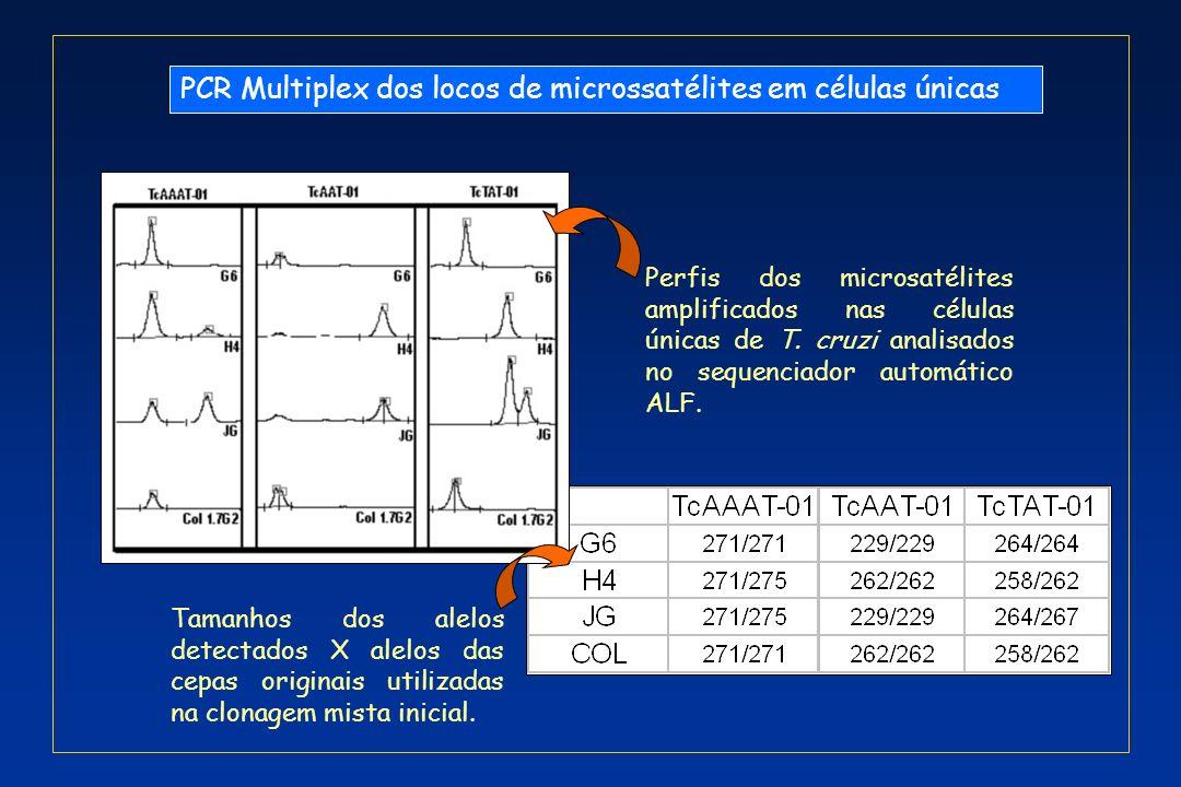 PCR Multiplex dos locos de microssatélites em células únicas