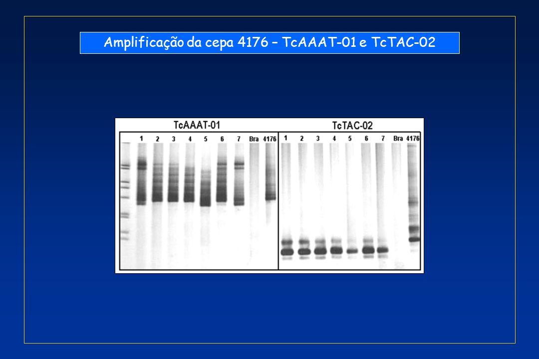 Amplificação da cepa 4176 – TcAAAT-01 e TcTAC-02