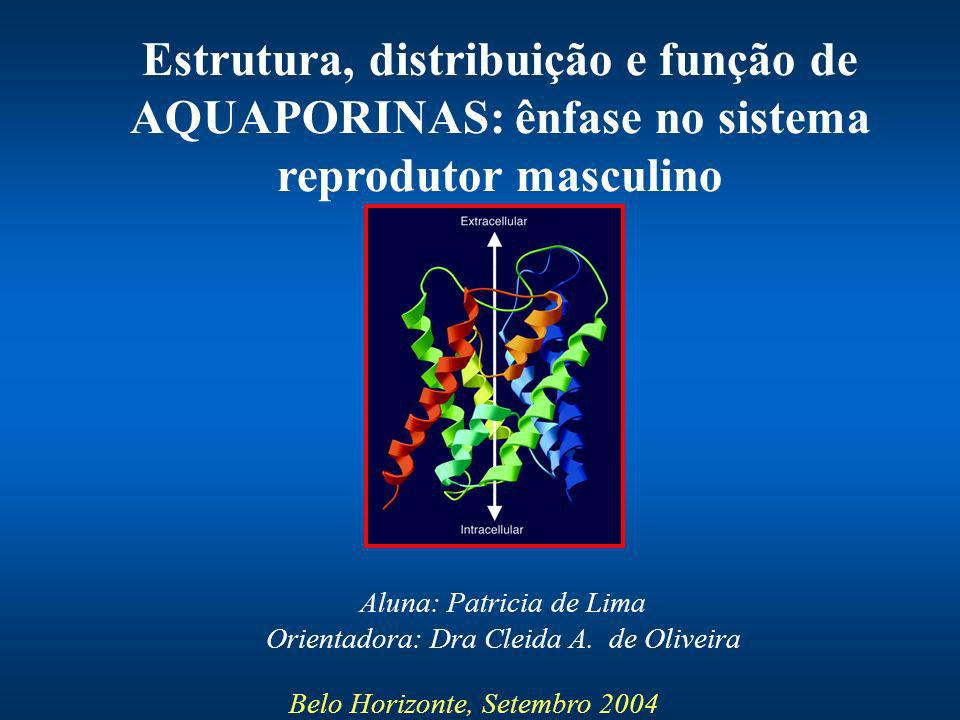 Estrutura, distribuição e função de AQUAPORINAS: ênfase no sistema reprodutor masculino