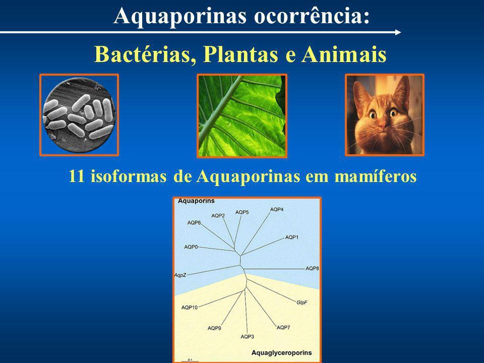 Aquaporinas ocorrência: 11 isoformas de Aquaporinas em mamíferos