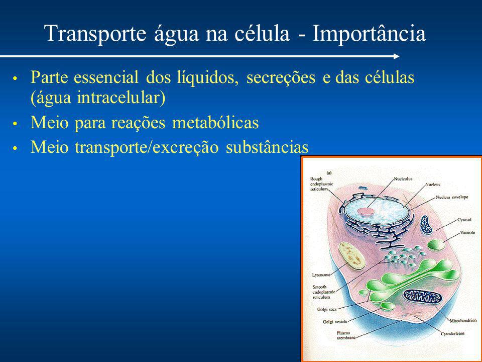 Transporte água na célula - Importância