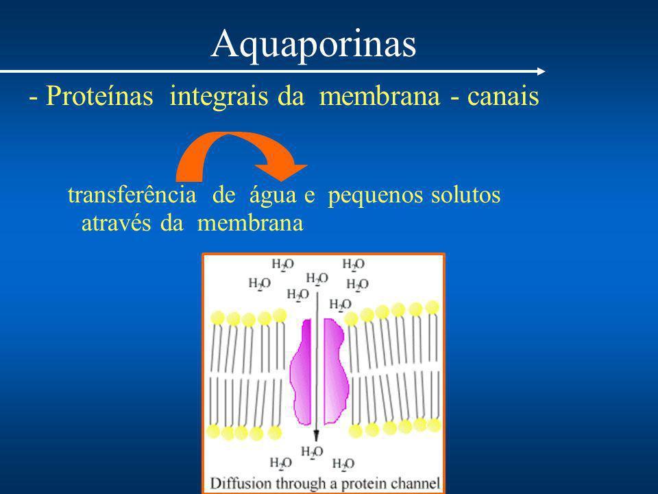 Aquaporinas - Proteínas integrais da membrana - canais