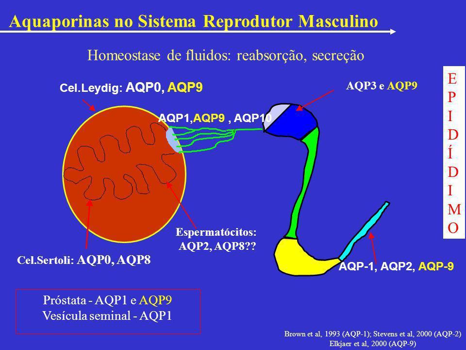 Brown et al, 1993 (AQP-1); Stevens et al, 2000 (AQP-2)