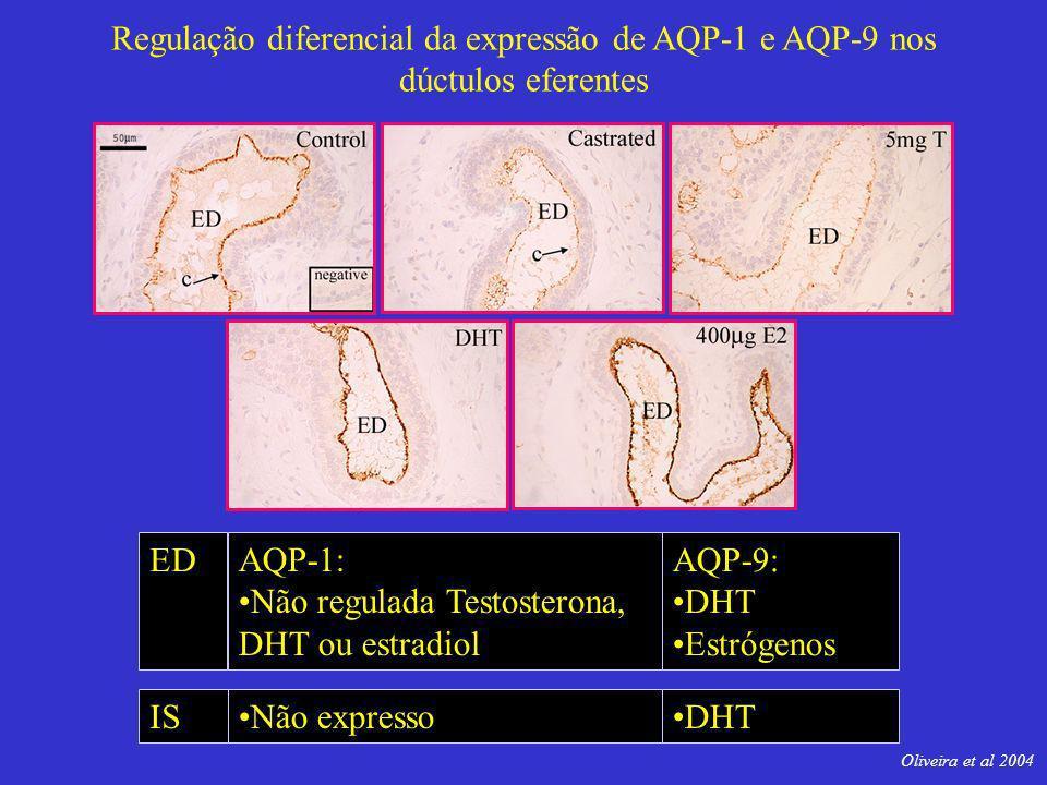 Não regulada Testosterona, DHT ou estradiol AQP-9: DHT Estrógenos ED