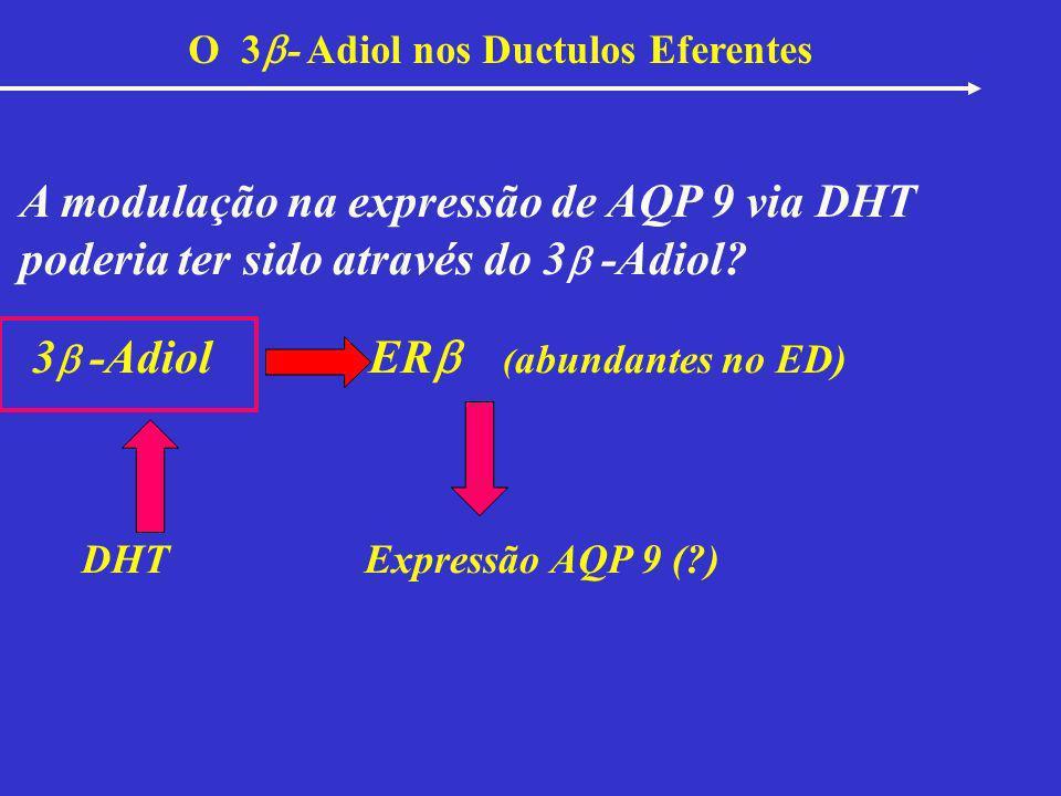 A modulação na expressão de AQP 9 via DHT