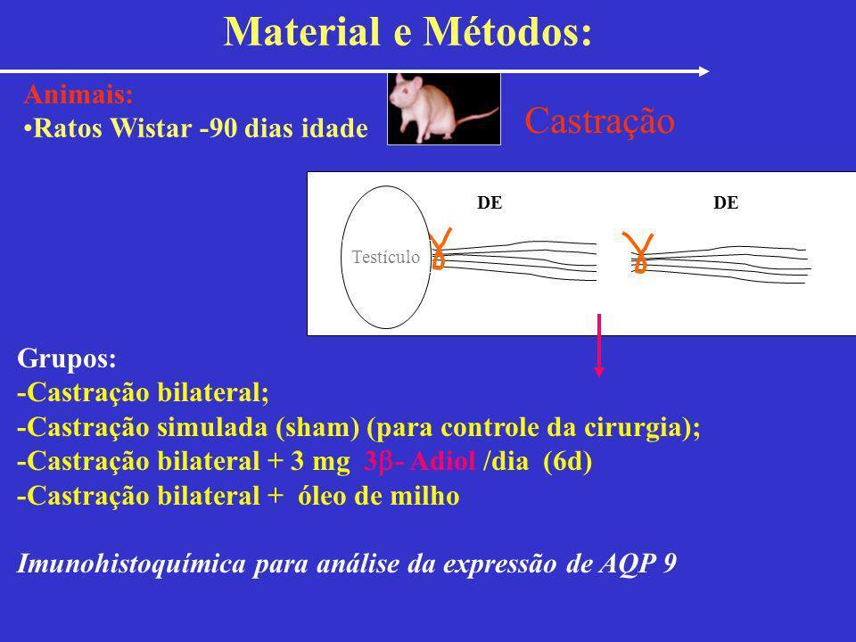 Material e Métodos: Castração Animais: Ratos Wistar -90 dias idade