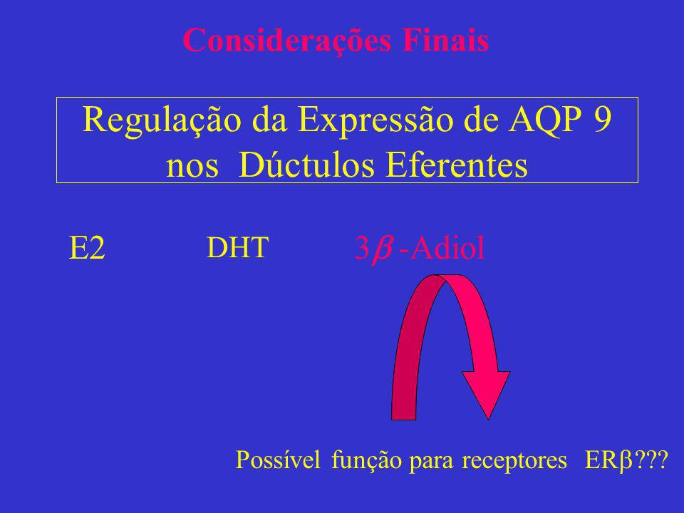 Regulação da Expressão de AQP 9 nos Dúctulos Eferentes