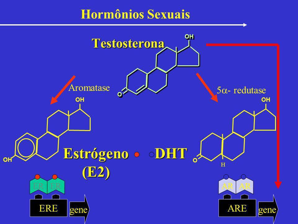 Estrógeno (E2) DHT Hormônios Sexuais Testosterona Aromatase