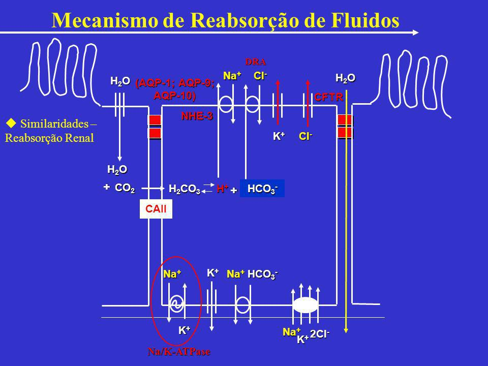 Mecanismo de Reabsorção de Fluidos