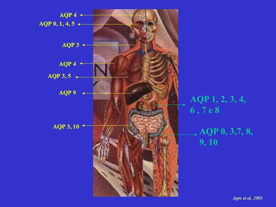 AQP 4 AQP 0, 1, 4, 5. AQP 3. AQP 4. AQP 3, 5. AQP 9. AQP 1, 2, 3, 4, 6 , 7 e 8. AQP 3, 10. AQP 0, 3,7, 8, 9, 10.