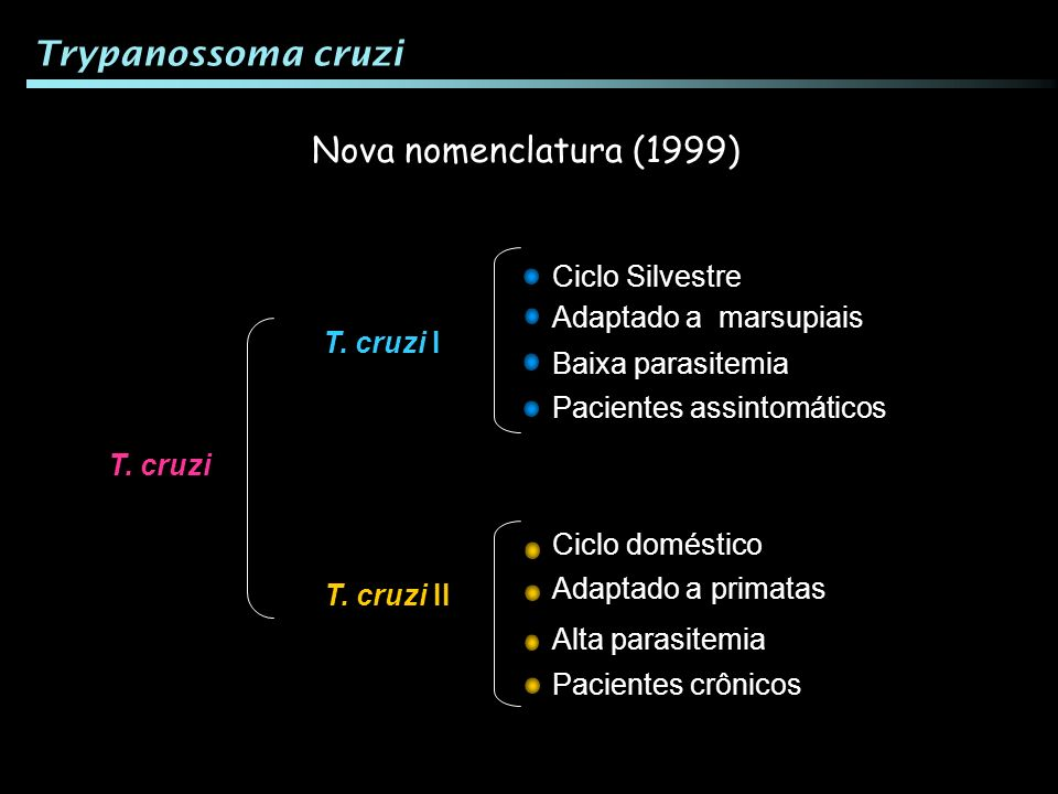 Trypanossoma cruzi Nova nomenclatura (1999) Ciclo Silvestre